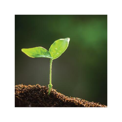 augimo stimuliatoriai