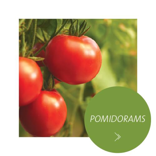 pomidorams