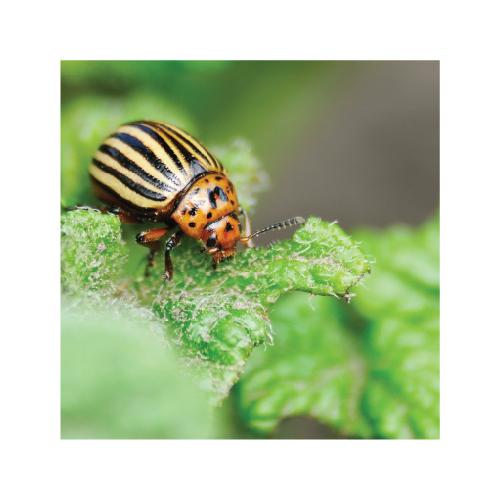 apsauga nuo kenkėjų insekticidai