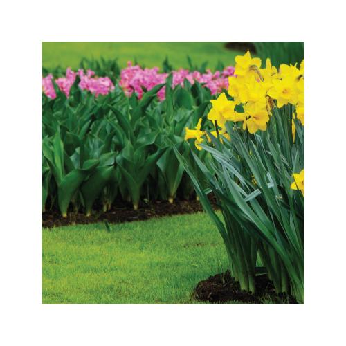 pavasariui